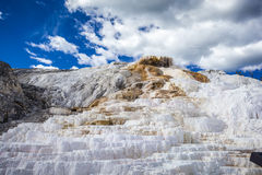 Parco nazionale di Mammoth Hot Springs, Yellowstone Fotografie Stock