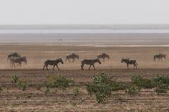 Parco nazionale di Manyara del lago Fotografia Stock