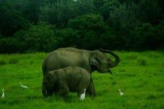 Parco nazionale di minneriya selvaggio asiatico della Sri Lanka - di Eliphant immagini stock libere da diritti