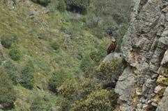 Parco nazionale di Monfragae, roccia con una colonia degli avvoltoi Fotografia Stock Libera da Diritti