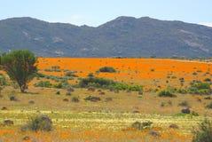 Paesaggi africani del sud Fotografia Stock Libera da Diritti