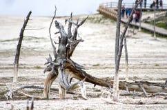 Parco nazionale di Paintpots Yellowstone degli artisti, Wyoming Fotografie Stock Libere da Diritti