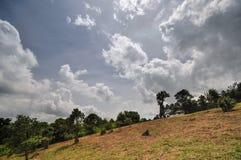 Parco nazionale di Phu Rua Fotografie Stock Libere da Diritti