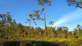 Parco nazionale di Phukradueng Immagini Stock