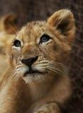 Parco nazionale di Pilanesberg Fotografie Stock