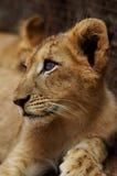 Parco nazionale di Pilanesberg Fotografia Stock Libera da Diritti