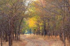 Parco nazionale di Serengeti in Tanzania di nord-ovest fotografie stock