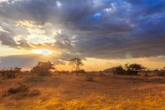Parco nazionale di Serengeti in Tanzania di nord-ovest fotografia stock libera da diritti