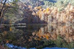 Parco nazionale di Sevenlakes in Autumn Bolu Turkey Yedigoller Milli Parki immagine stock libera da diritti