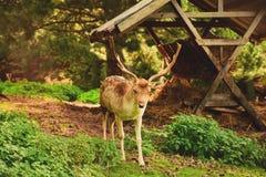 Parco nazionale di Sila immagine stock