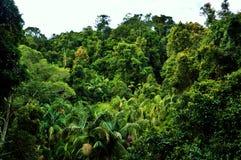 Parco nazionale di Tamborine del supporto Fotografia Stock Libera da Diritti