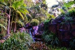 Parco nazionale di Tamborine del supporto Immagine Stock