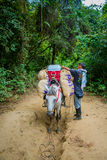 Parco nazionale di Tayrona, Colombia Fotografie Stock Libere da Diritti