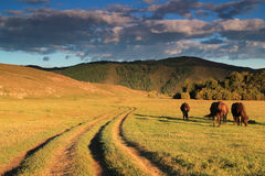Parco nazionale di Terelj fotografia stock libera da diritti