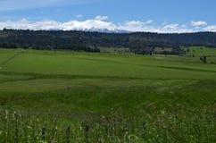 Parco nazionale di Tongariro - supporto Ruapehu Immagine Stock