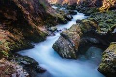 Parco nazionale di Triglav della gola di Vintgar Fotografia Stock