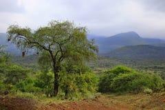 Parco nazionale di Tsavo nel Kenya Fotografia Stock