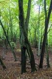Parco nazionale di Wolin in Polonia Fotografia Stock