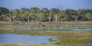 Parco nazionale di Yala Immagine Stock Libera da Diritti