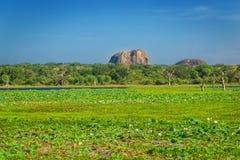 Parco nazionale di Yala, Sri Lanka, Asia fotografie stock