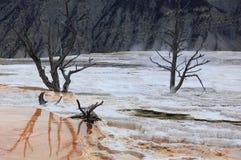 Parco nazionale 2 di Yellowstone Fotografia Stock