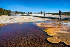 Parco nazionale di Yellowstone Immagine Stock