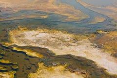 Parco nazionale di Yellowstone degli organismi di Thermophiles Fotografie Stock