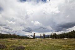 Parco nazionale di Yosemite dei prati di Toulumne Fotografie Stock