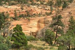 Parco nazionale di Zion Immagine Stock