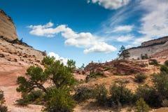 Parco nazionale di Zion Fotografie Stock