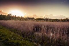 Parco nazionale, riserva Fotografia Stock
