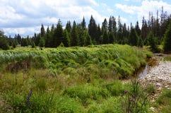 Parco nazionale Sumava dell'insenatura di Roklansky immagine stock