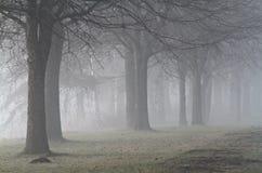 Parco nebbioso con gli alberi nudi fotografie stock