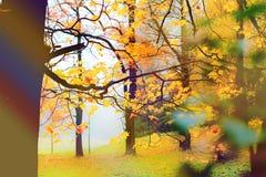 Parco della nebbia di autunno Immagine Stock Libera da Diritti