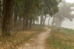 Parco nebbioso vicino al lago Fotografia Stock Libera da Diritti