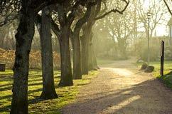 Parco nel tempo di primavera Fotografie Stock Libere da Diritti