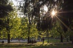 Parco nel tramonto Immagine Stock