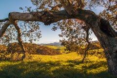 Parco nella contea di Sonoma Fotografia Stock Libera da Diritti