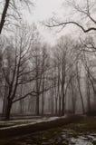 parco nevoso della città di inverno in foschia Immagini Stock Libere da Diritti