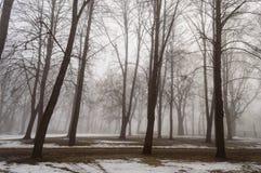 parco nevoso della città di inverno in foschia Immagini Stock