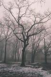 parco nevoso della città di inverno in foschia - vecchio sguardo d'annata Fotografia Stock Libera da Diritti