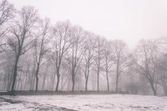 parco nevoso della città di inverno in foschia - vecchio sguardo d'annata Fotografie Stock Libere da Diritti