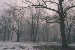 parco nevoso della città di inverno in foschia - vecchio sguardo d'annata Immagini Stock Libere da Diritti