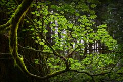 Parco pacifico di spirito, Vancouver Fotografie Stock Libere da Diritti