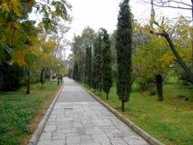 Parco in pieno dei cipressi Fotografia Stock Libera da Diritti