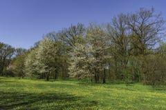Parco in primavera, Fotografia Stock