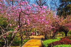 Parco in primavera Immagini Stock
