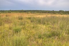 Parco provinciale della collina degli uccelli, Manitoba immagini stock