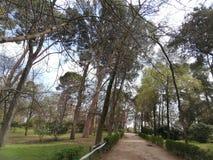 Parco pubblico con gli alberi e il bushes immagini stock