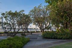 Parco pubblico con gli alberi ed il cielo blu fertili fotografie stock